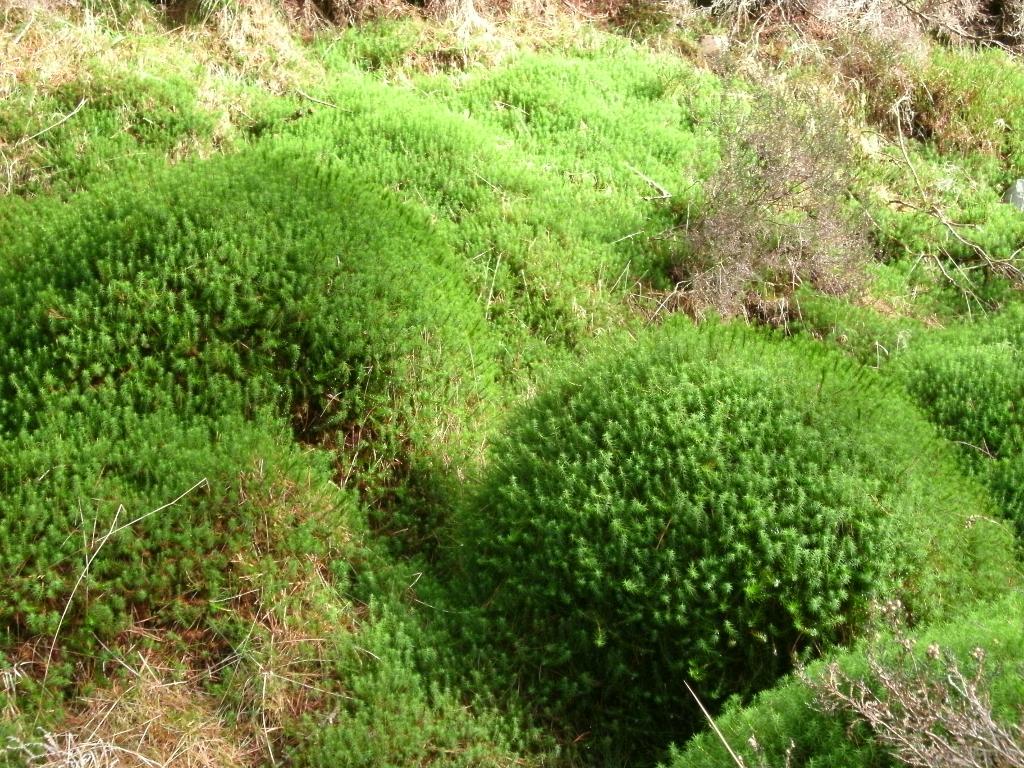 Cwm Mynach Moss